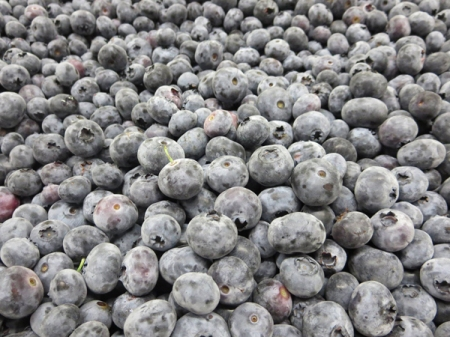 blueberries at Goodman's