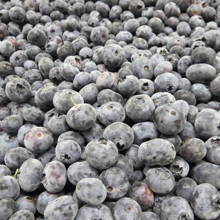 blueberries at Goodman's