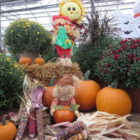 The greenhouse is full of beautiful mums, pumpkins, and ghosts!