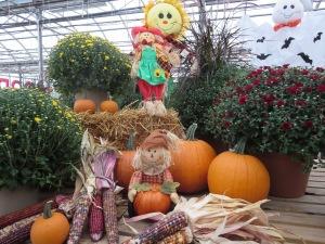 Goodman's, Niagara Falls, mums, pumpkins,