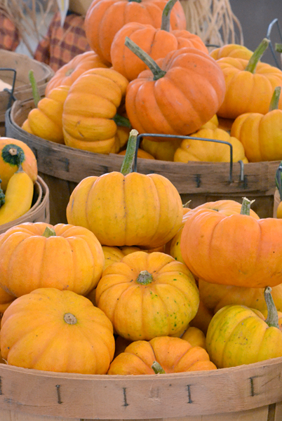 mini pumpkins at Goodman's Farm Market