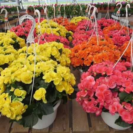 Flowers at Goodman's Farm Market Niagara Falls, NY
