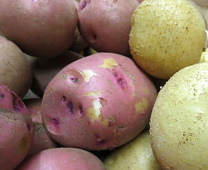red-white-homegrown-potatoes-by-goodmans-farm-market