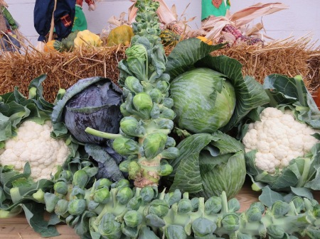 Brussels sprouts, cabbage and cauliflower available at Goodman's Farm Market! in Niagara Falls.